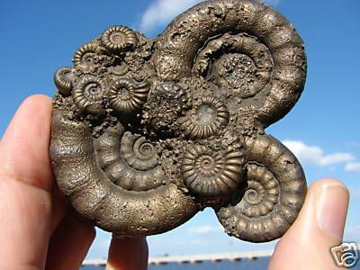 fossil ammonites - Its like the greatest natural fractal ever   Thank you for my trip Hotelrade.com