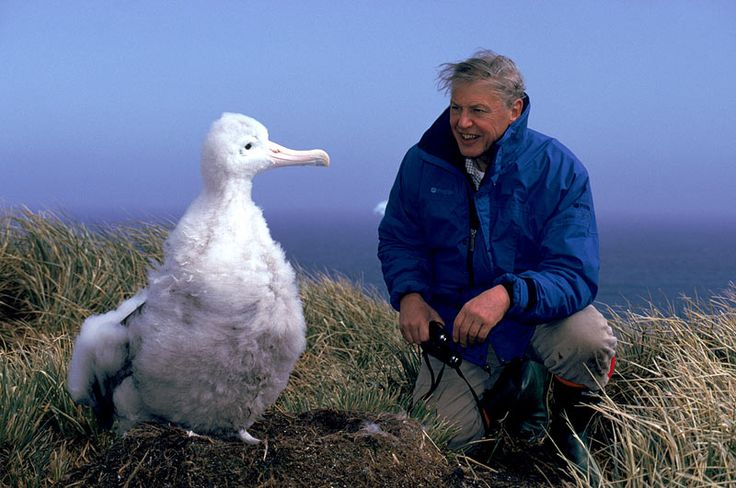 David Attenborough with baby albatross.