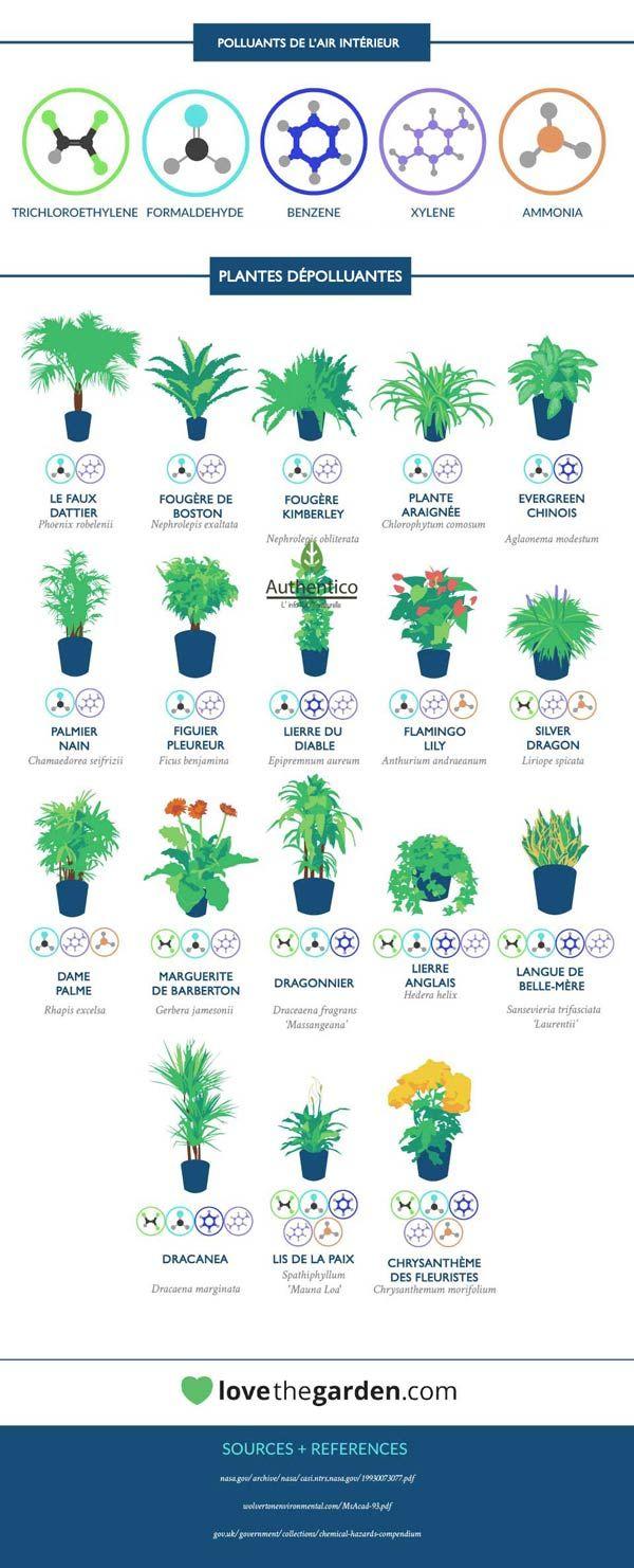 Plantes dépolluantes de l'air intérieur Plus