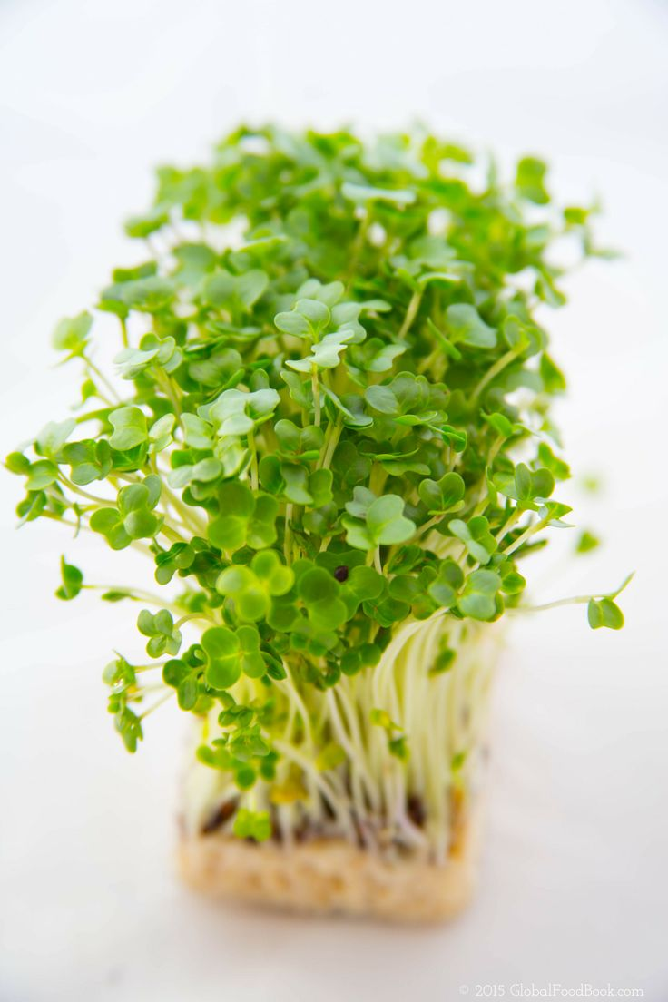 15 ASTONISHING BENEFITS OF GARDEN CRESS (HALIM SEEDS). You may have eaten garden cress in the past or you may not have even come across this small-but-mighty herb. However, whichever category you fall into.... #Benefitsofgardencress #GardenCress.