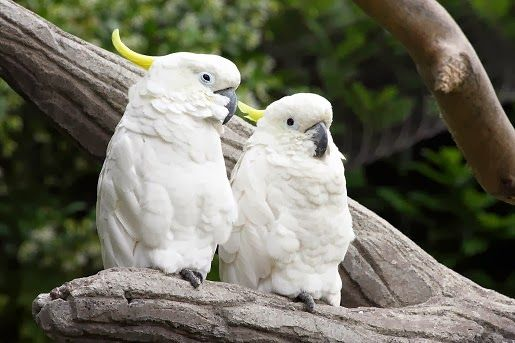 Pokarmy dla dużych papug