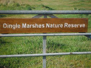 The Frugal Deer Dingle Marshes