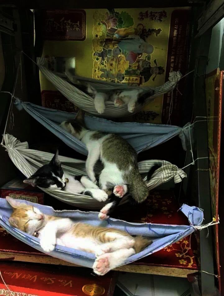 Cats And Kittens For Sale In Coventry Considering Cats And Kittens