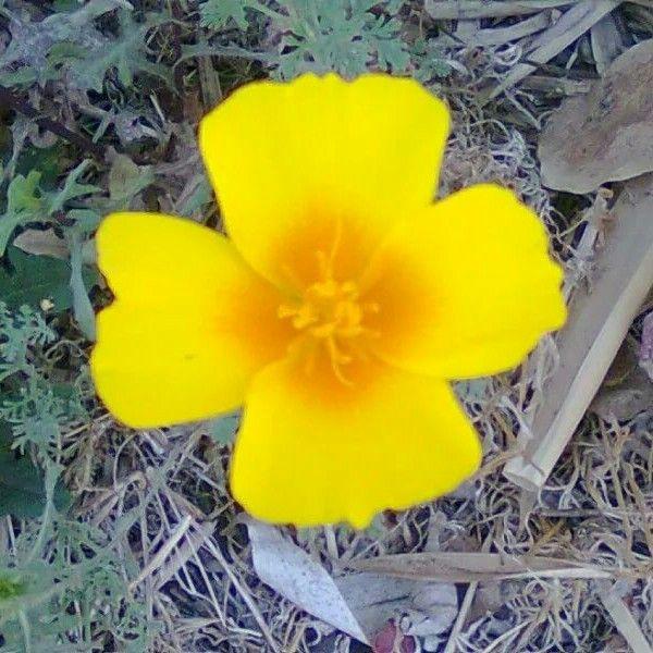 Caminando lo encontramos con una linda flor amarilla.