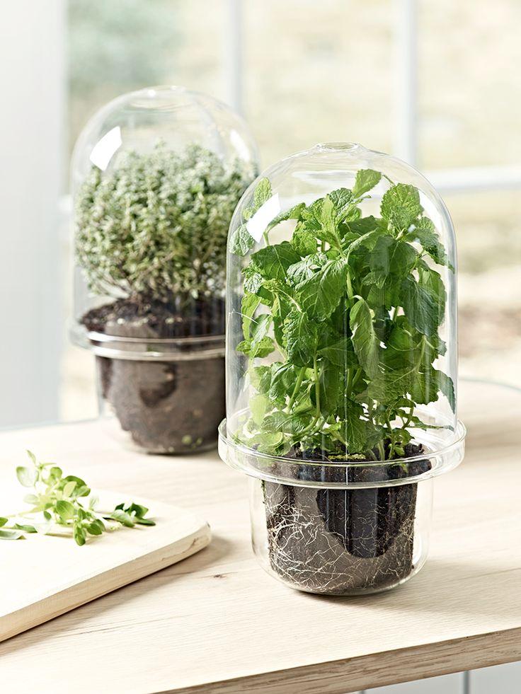 17 best images about spring 2016 kitchen on pinterest for Indoor gardening glasses