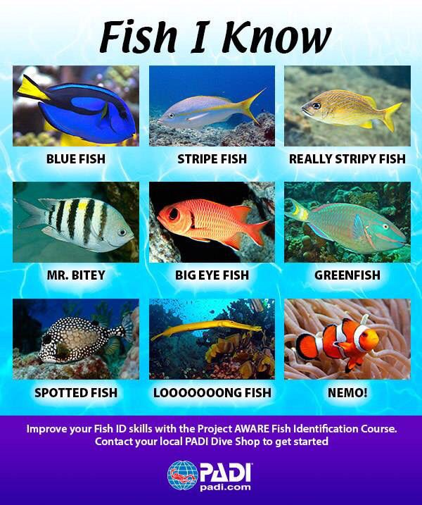 Start you PADI Fish ID specialty at Oceans 5 Gili Air any time!  #padi #giliair #fish #scuba #diving #indonesia