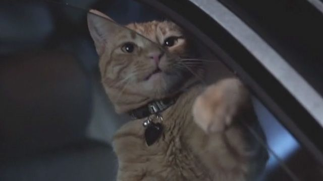 A ginger tabby named Meghan (played by cat actor Charlie) co-stars in the short film Cat Power (2013).