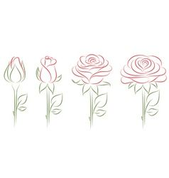 blooming roses vector