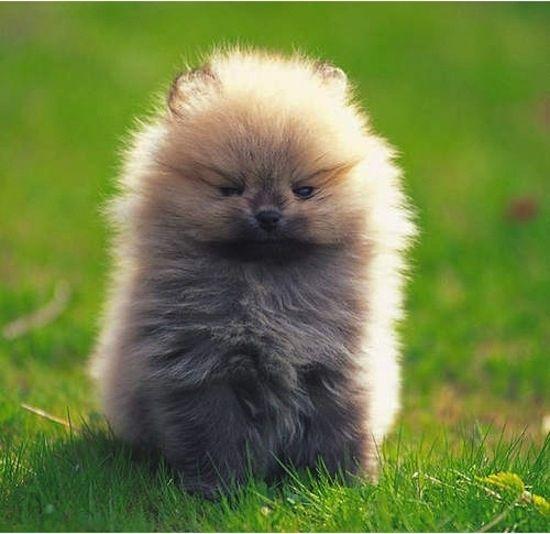 Oh my gosh!! Too cute!!