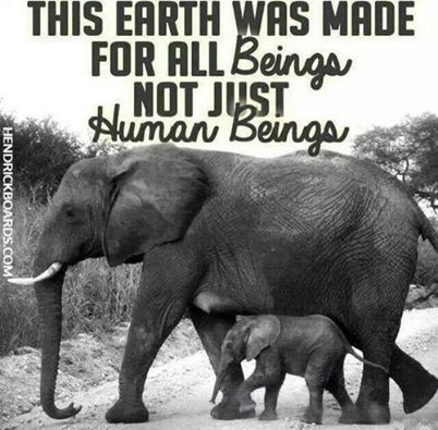 elephants vegan animal rights animal liberation vegetarian ...
