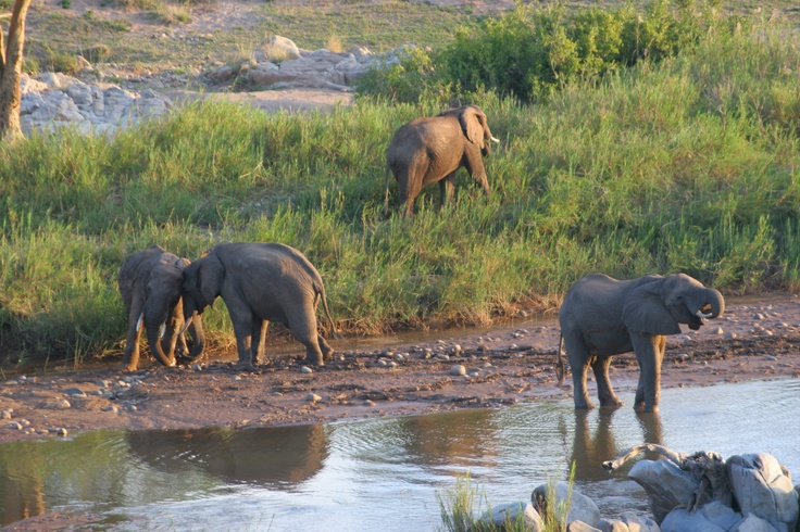 The Olifants River