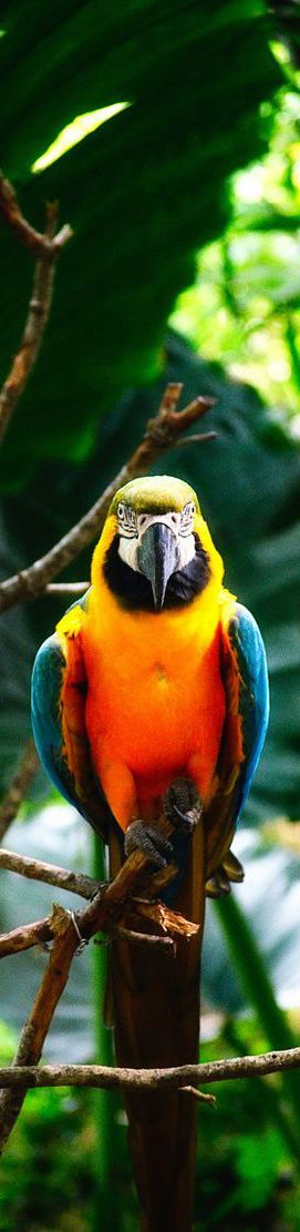 Beautiful Macaw parrot. - Haute In Rio | cynthia reccord