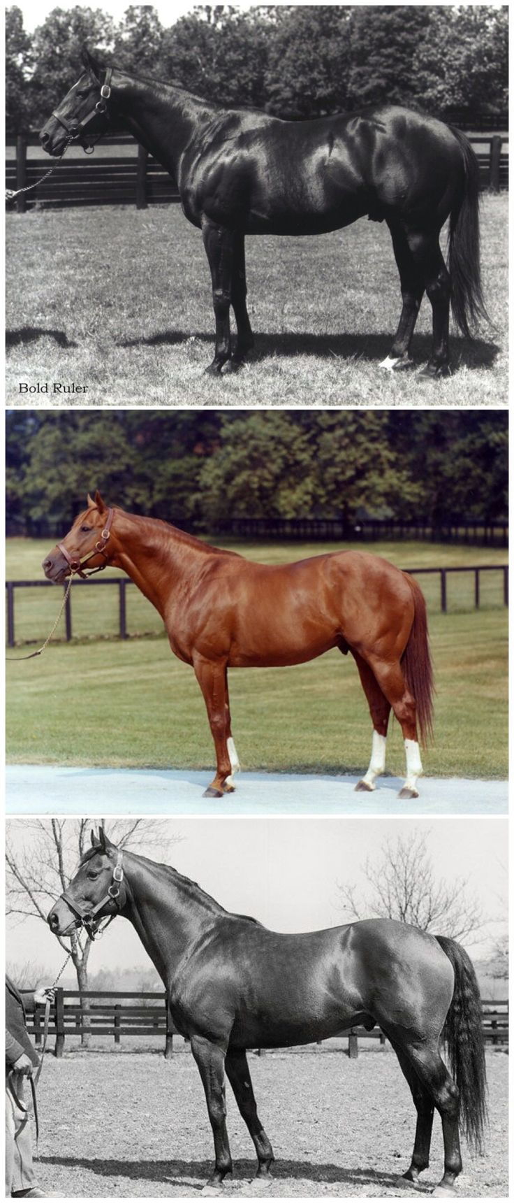 1431 best Thoroughbreds/Standardbreds Famous and not so famous ...