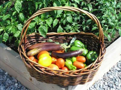 When to plant fall vegetables in nj zone 6 pot gardening - Vegetable garden planting guide zone 6 ...