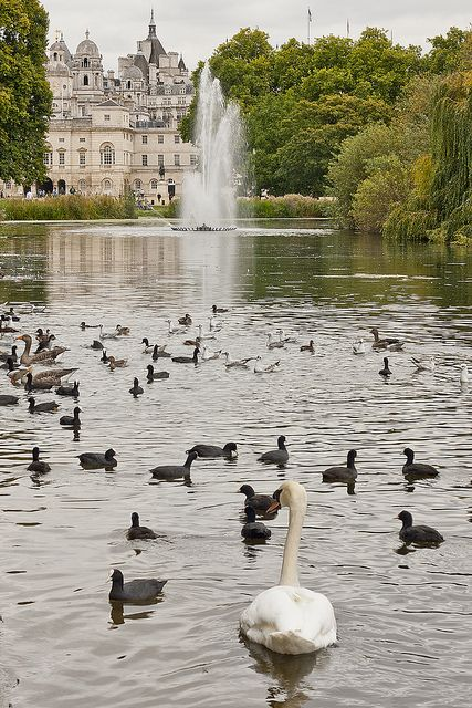 Fountain In The Park by mliebenberg, via Flickr, Buckingham Palace in the background   London, England