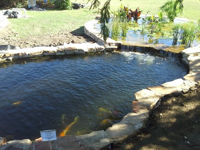 100 best images about pond bog filter ideas and designs on for Koi pond size