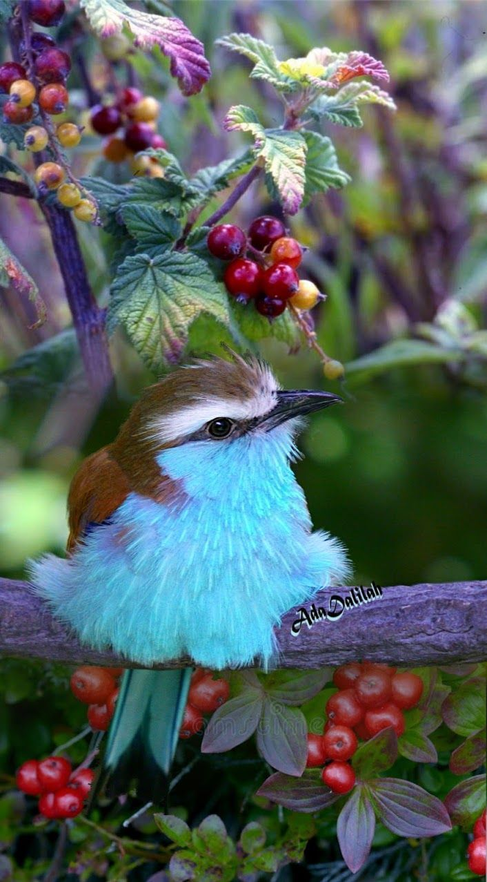 15 of the Most Beautiful Birds