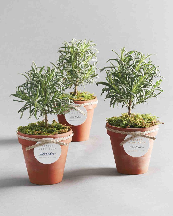 Top best herb centerpieces ideas on pinterest