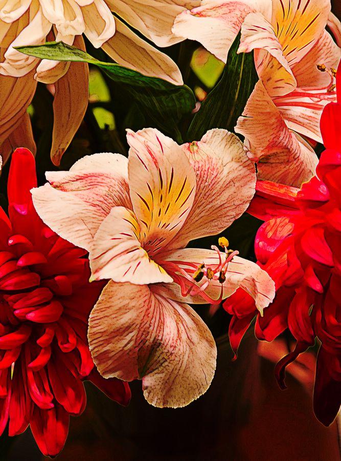 Peruvian Lily Grain by Bill Tiepelman