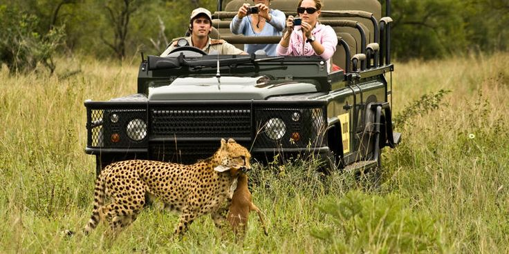 The Mala Mala Private Game Reserve is a world famous South African park filled with some of the most incredible game viewing you will ever witness! Visit http://treksafaris.com for more info! #travel #africa #southafrica #safari #africansafari