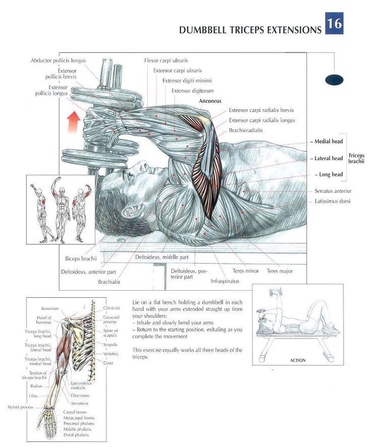 Triceps Extension #Dumbbell #workout #gymaholic Visite www.saudeprospera.com.br e saiba dicas para cuidar do seu corpo.