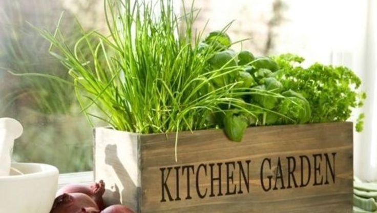 Bylinková záhrada vo vašej kuchyni: Dekorácia, ktorá navyše chutí