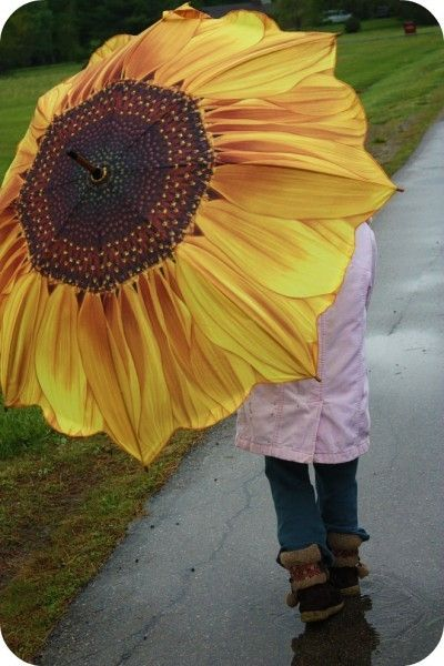 sunflower on rainy days ... This is like my big pink umbrella picture....I would love to have one. It would be great at the beach!