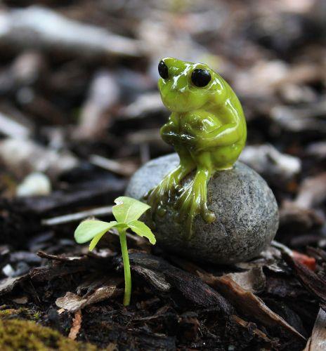 Cute Frog Knees Bent On Stone – Garden