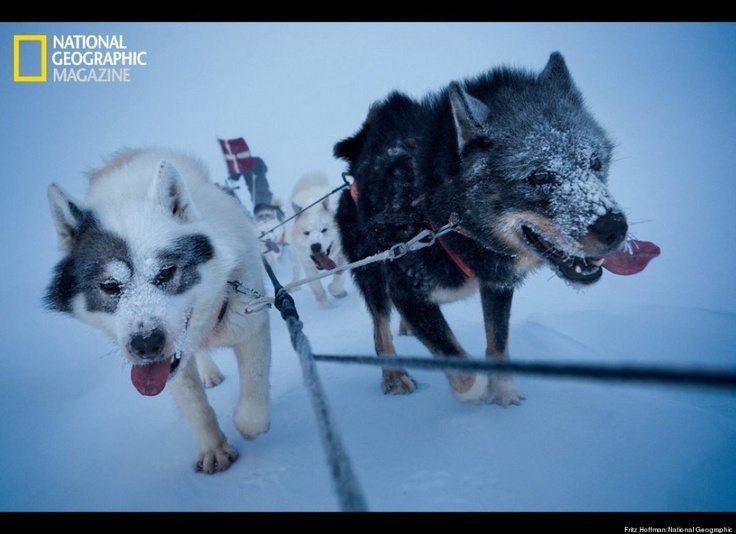Sirius Sledge Patrol, Denmark Navy Dogsled Team, Patrols Greenland Wilderness (PHOTOS)