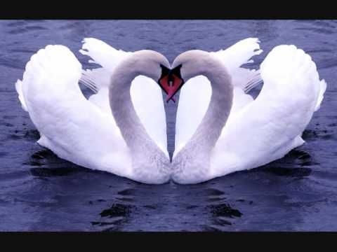Carnival of the Animals The Swan - Camille Saint Saens