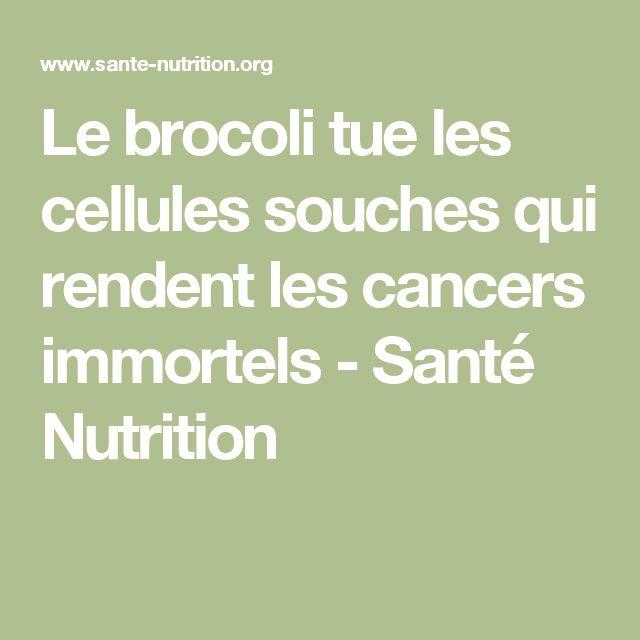 Le brocoli tue les cellules souches qui rendent les cancers immortels - Santé Nutrition