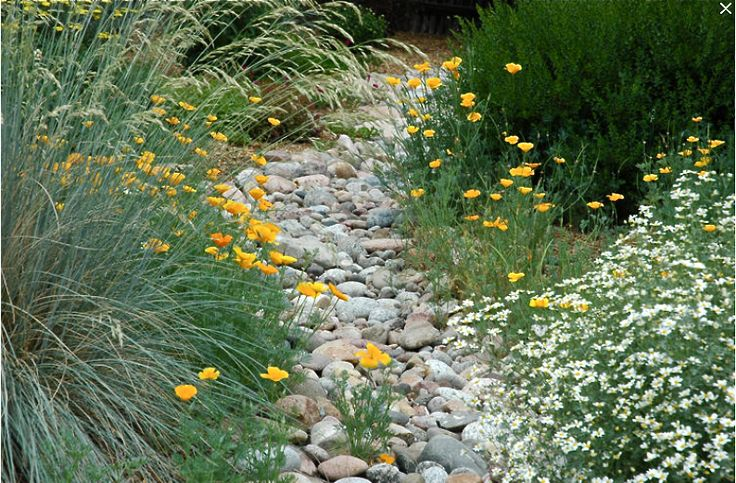 Dry stream bed. For the back yard, actually--the swale behind the house. See Dry Creeks board for more, but I think this is my favorite.