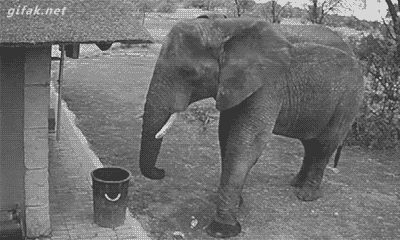 An elephant got caught on security camera picking up trash and putting it in a garbage bin.