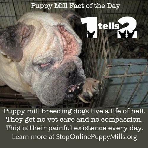 #Stoppuppymills Puppy Mill Fact of the Day