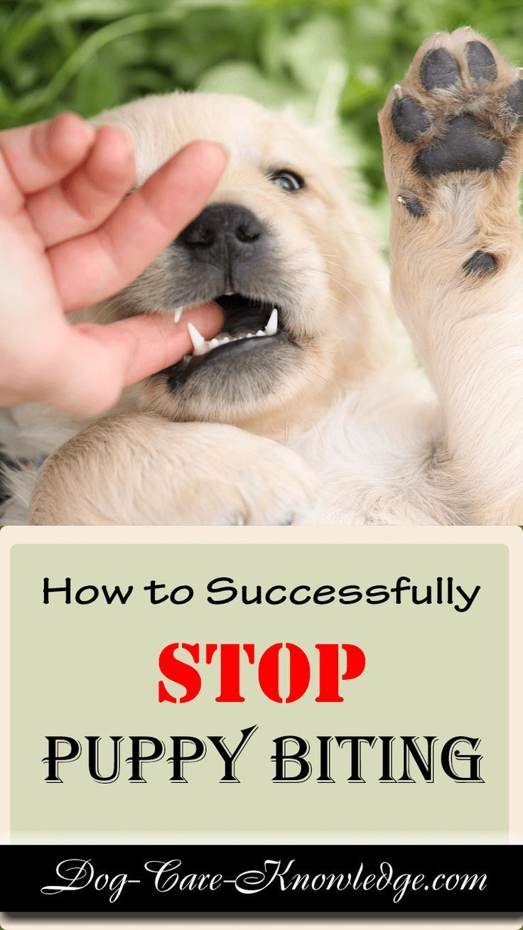 Forum on this topic: No More Chewing: Dog-Training Tips for Chompers, no-more-chewing-dog-training-tips-for-chompers/