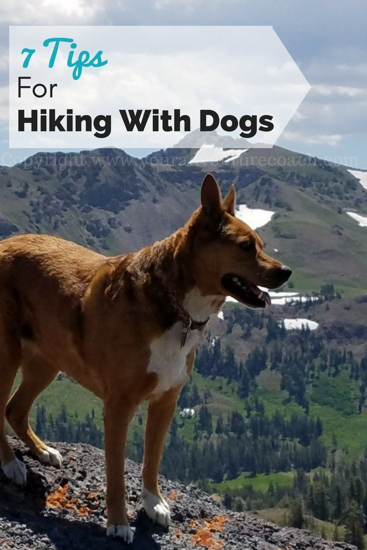 Click for tips for hiking with your dog without going crazy! #hikingwithdogs