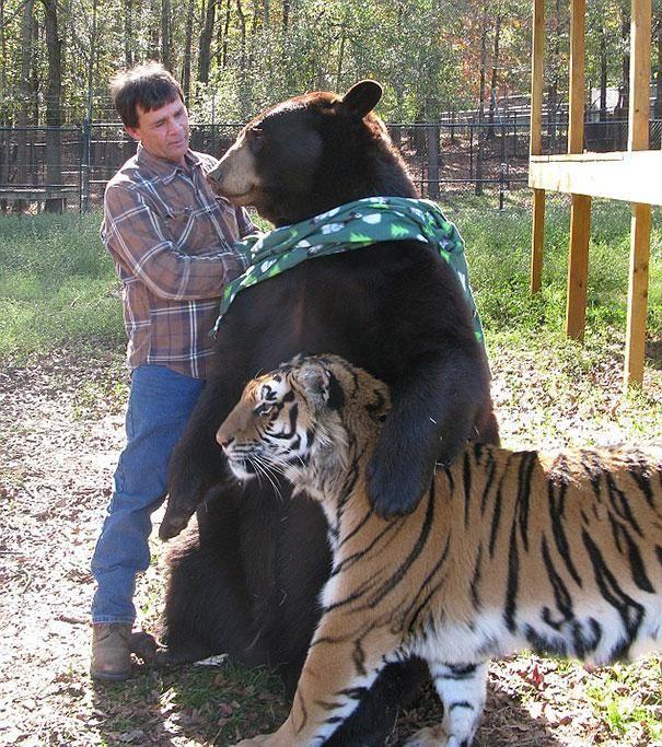 Tigres e porcos, leões e ursos, elefantes e cães, girafas e avestruzes... Essas amizades incomuns mostram que os animais podem ser muito mais emocionalmente complexos do que acreditamos. Confira as fotos de cortar o coração