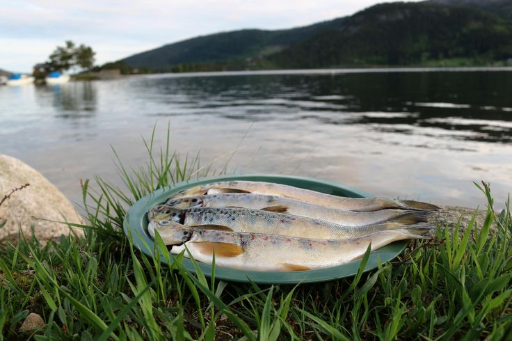 Happy camping at Neset Camping by Byglandsfjorden in Setesdal near Evje.  The fish from the fjord has a very good taste. Book at http://www.neset.no/ Photo: Inge Dalen©Visit Southern Norway