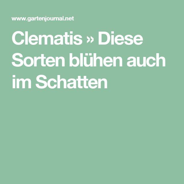 Clematis » Diese Sorten blühen auch im Schatten