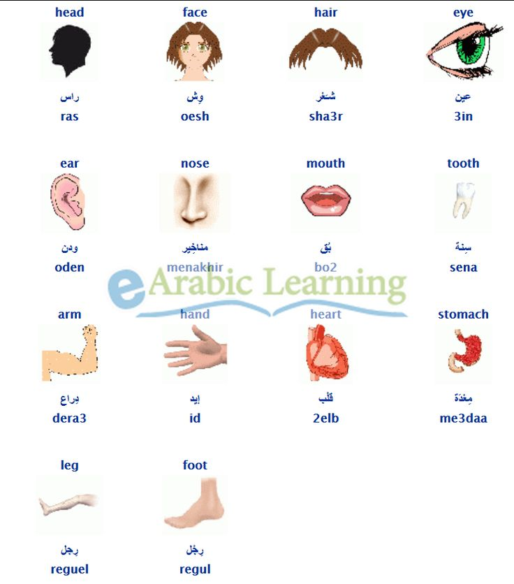 body parts in  #egyptian #Arabic