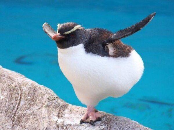 Прикольная картинка пингвины
