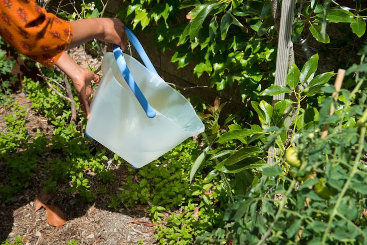 TIP:  Catch water in your shower and use it outside on your plants.