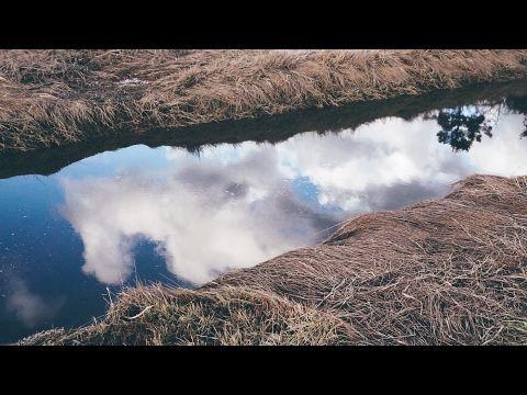 Chemainus Estuary - Sunday Stroll - YouTube