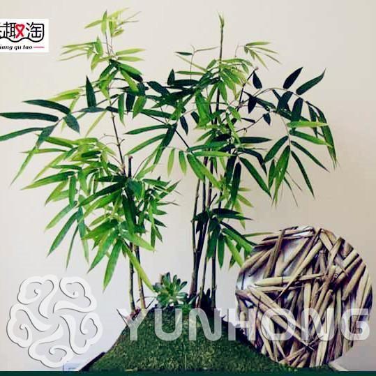 Die besten 25+ Bamboo seeds Ideen auf Pinterest Chinesische - bambus garten design