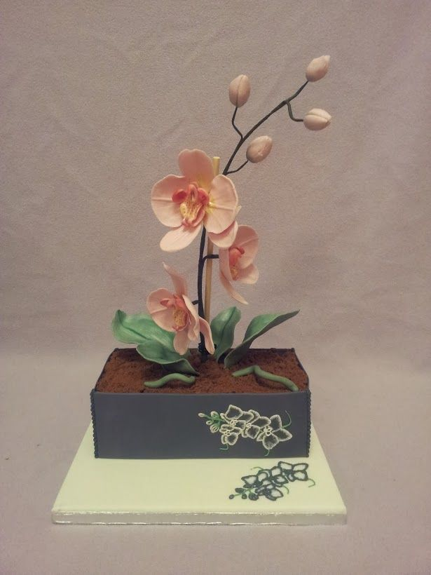 Moth Orchid in a pot Cake - By DC Cakes and Bakes Ltd