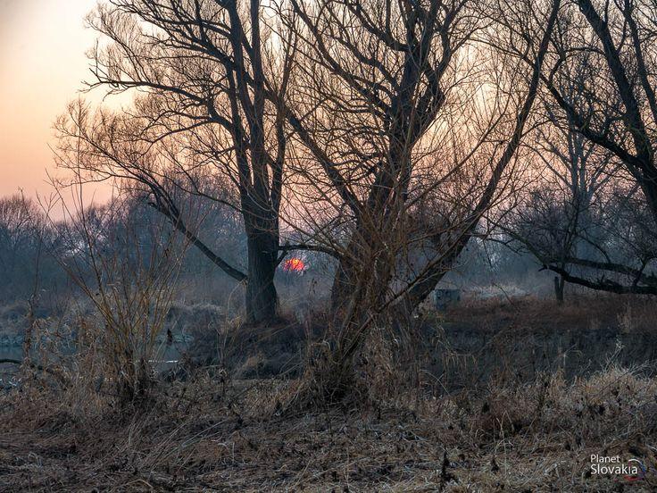 Západ slnka v alúviu rieky Moravy