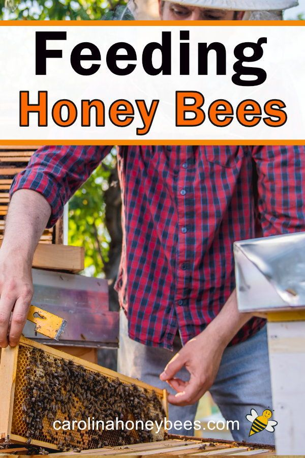 Feeding Bees Sugar Water How Why Feeding Bees Bee Keeping Bee