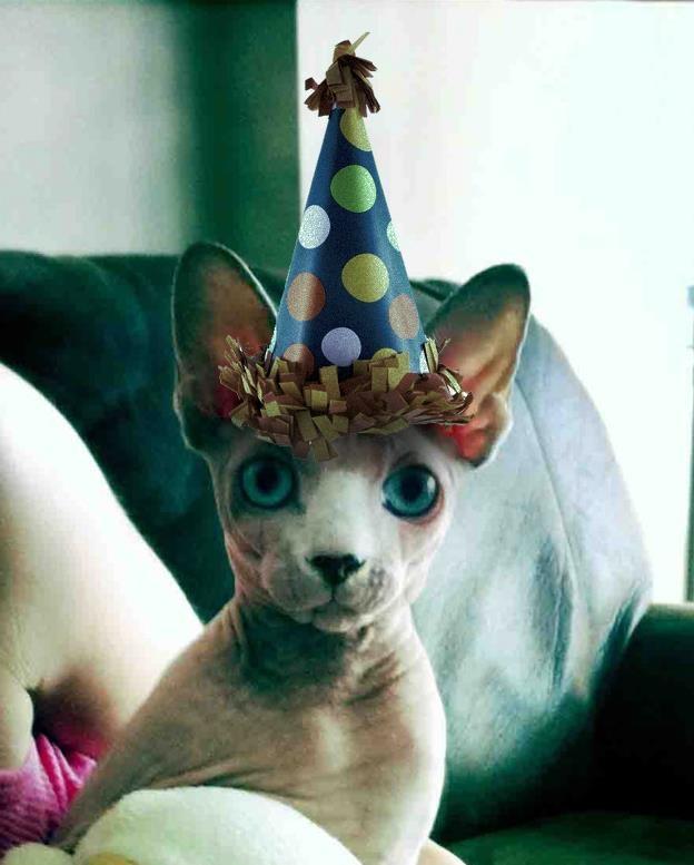 Happy Birthday Calvo Sphynx Cats Happy Birthday Baby