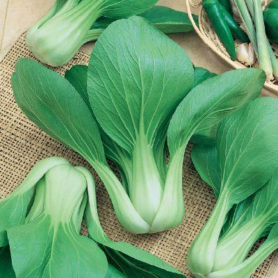 PAK CHOI Baby Choi (The Organic Gardening Catalogue)