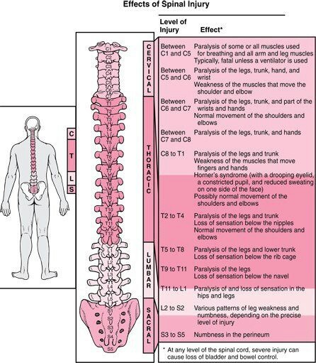 Effects Of Spinal Injuries